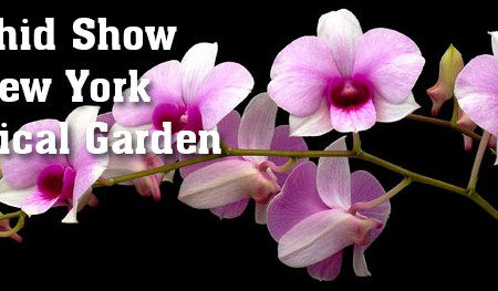 Orchid Show New York Botanical Garden 2014