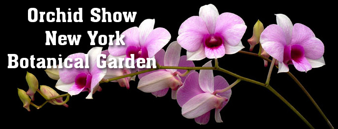 Orchid Show NYBG