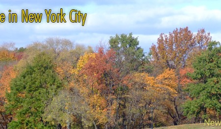 Fall Foliage in New York City