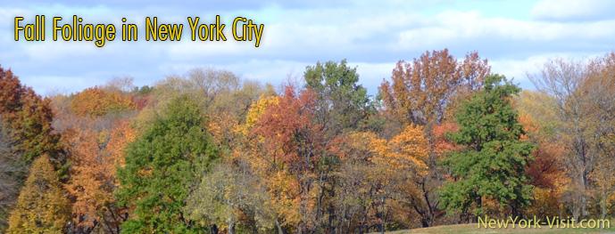Autumn Colors in Manhattan, Bronx, Brooklyn, QAueens, Staten Island, New York City